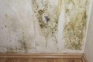 L'humidité en logement individuel